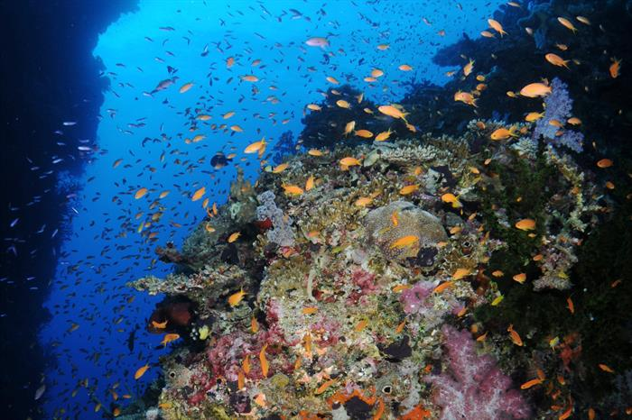 Stunning Fiji reefs