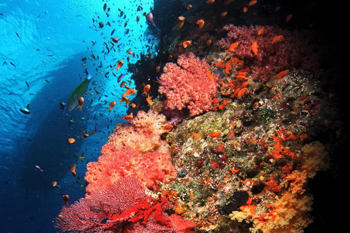 Healthy Fiji corals