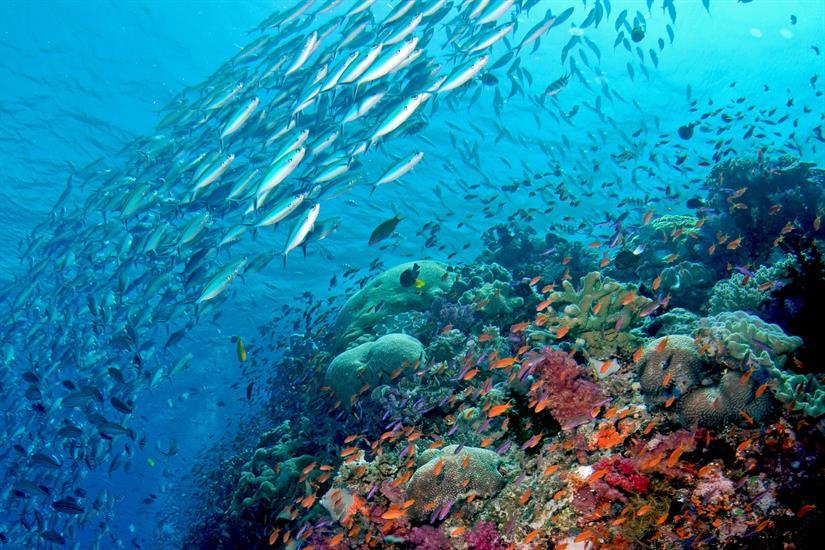 Amazing visibility in Fiji
