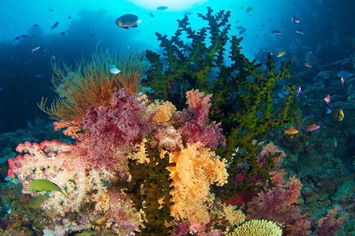 Vibrant reefs in Fiji