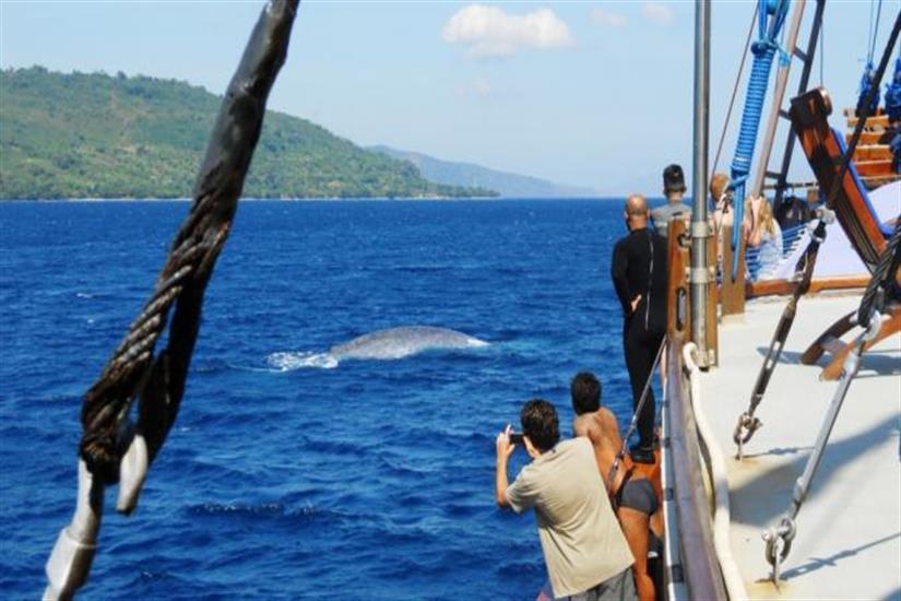 Whale Watching in the Banda Sea