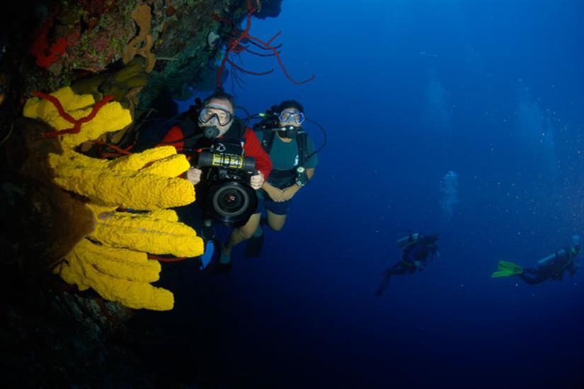 Cayman Aggressor IV Liveaboard Amazing Walls