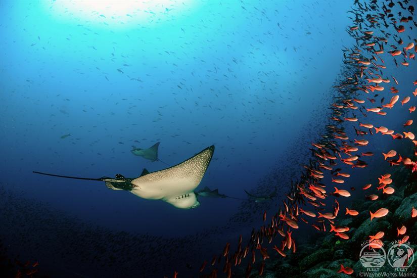 Amazing diving with Galapagos Aggressor III Liveaboard