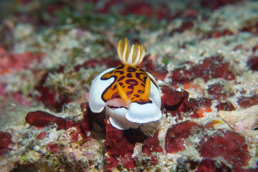 Amazing marine life - MV Leo Liveaboard Maldives