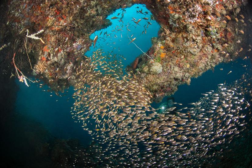 Beautiful Maldives Dives - MV Leo Liveaboard