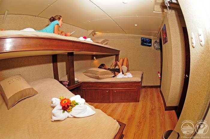 Okeanos Aggressor Liveaboard Quad Stateroom