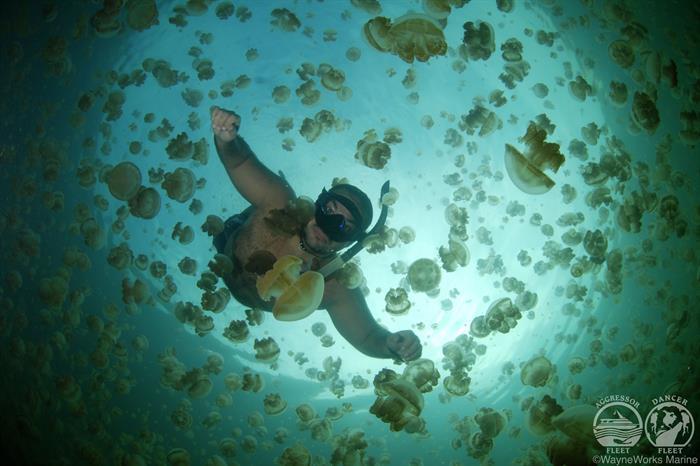Jellyfish Lake with Palau Aggressor II Liveaboard