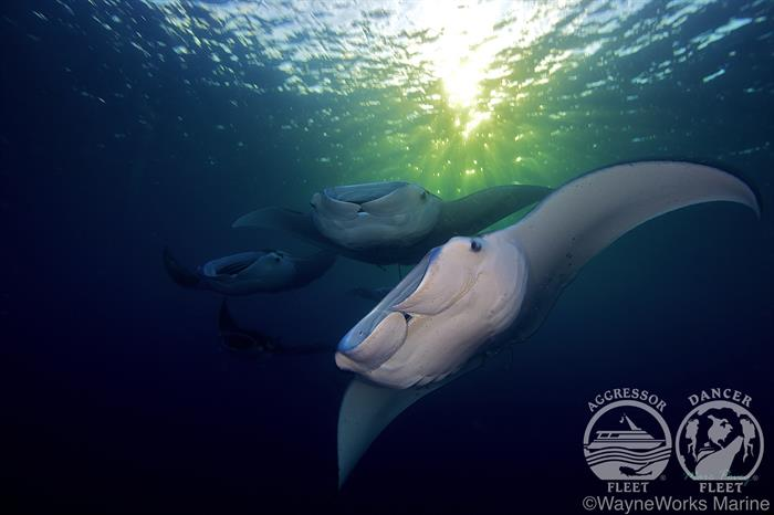 Stunning dives with Palau Aggressor II Liveaboard