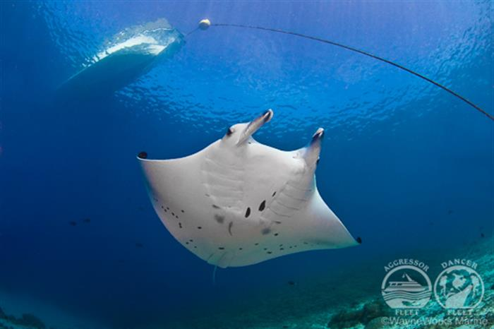 Amazing Diversity with Palau Aggressor II Liveaboard
