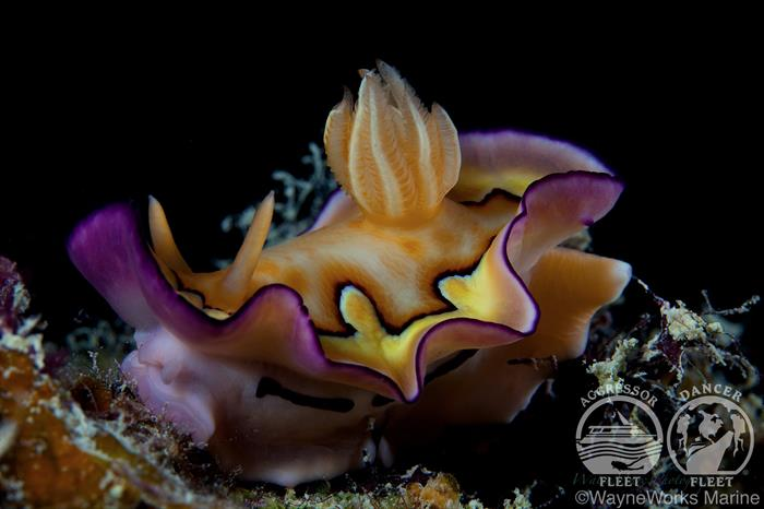 Diverse Marine life with Palau Aggressor II Liveaboard