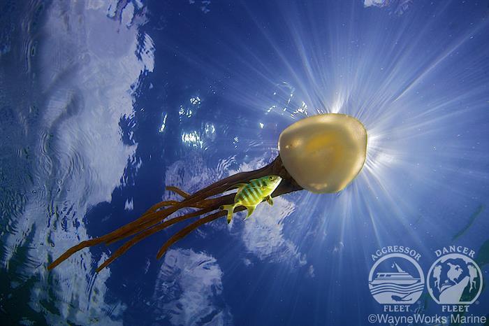 Beautiful Marine Life with Palau Aggressor II Liveaboard