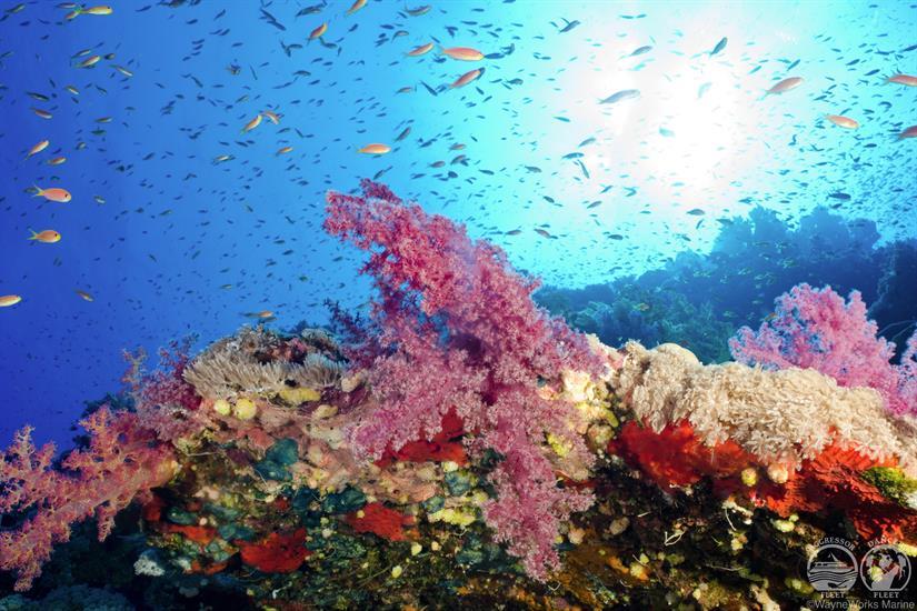 Amazing Corals with Red Sea Aggressor Liveaboard