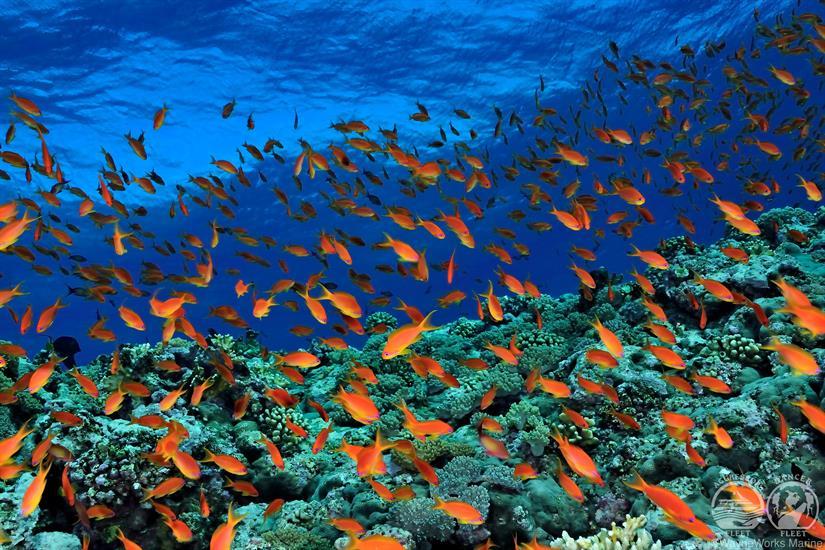 Red Sea Diving Red Sea Aggressor Liveaboard