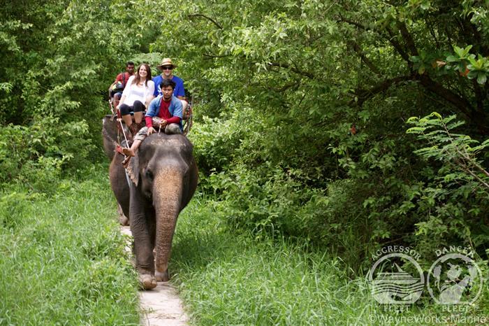Thailand Aggressor Liveaboard Elephant Trekking