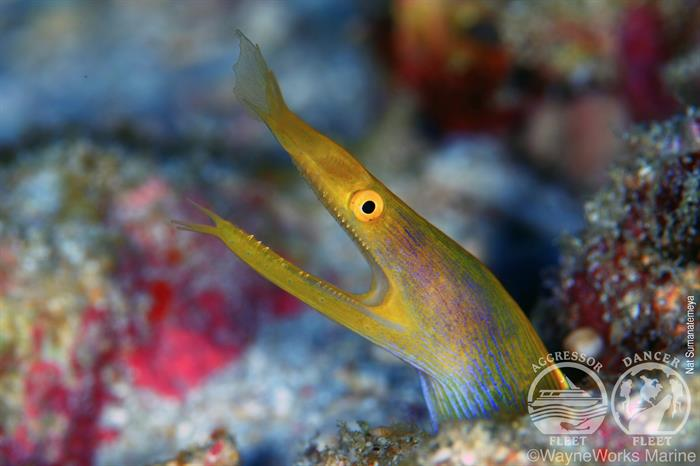 Cool critter diving in the Andaman Sea