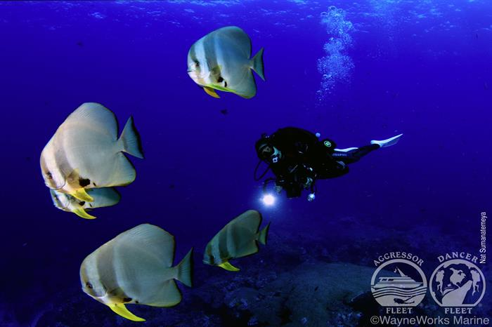 Stunning dives with Thailand Aggressor Liveaboard