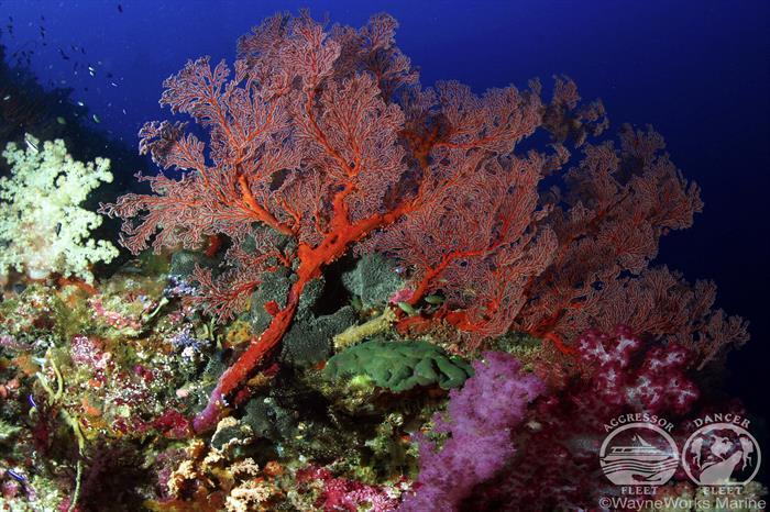 Healthy Palau Coral Reefs