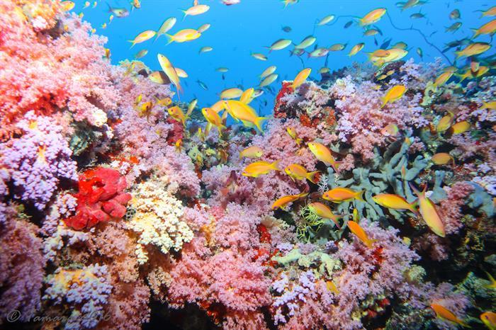 Beautiful Reefs - Maldives
