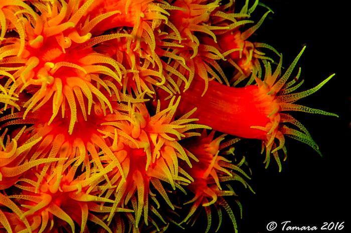 Colourful Anemone