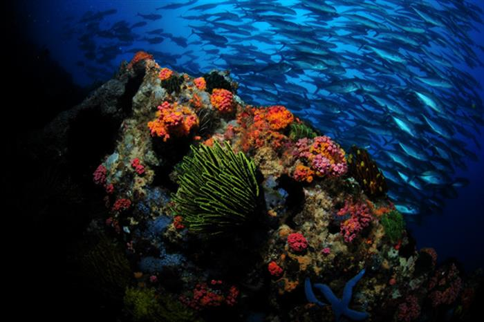 Healthy corals in the Philippines