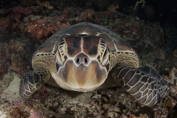 Diving with Turtles in the Philippines