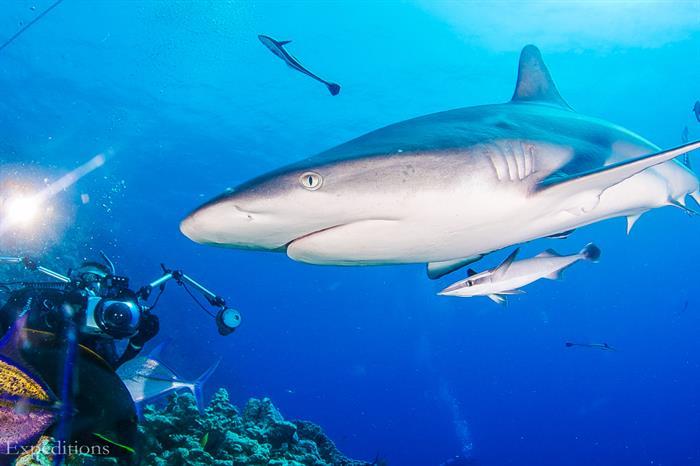 Coral Sea Safari - Spoilsport Liveaboard Australia