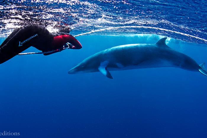 Minke Whale Expedition - Spoilsport Liveaboard Australia