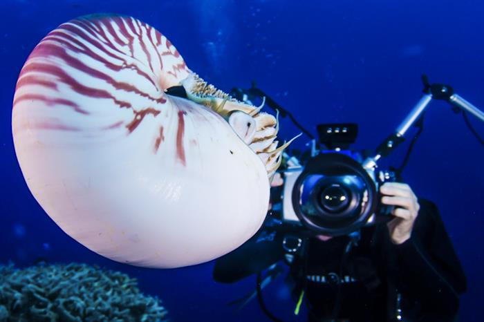 Nautilus Expedition - Spoilsport Liveaboard Australia