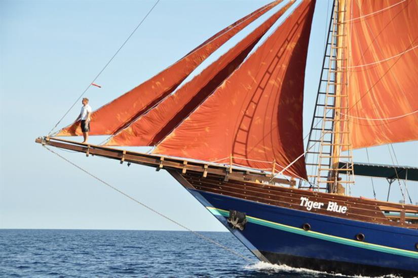 Tiger Blue at full sail