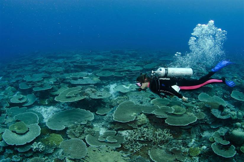 Stunning Maldives Corals
