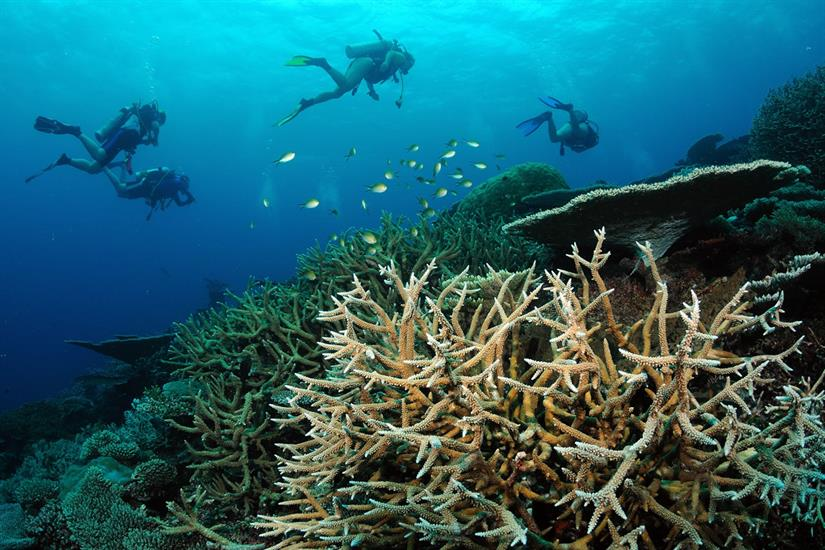 Scuba Diving Beautiful Reefs in the Maldives
