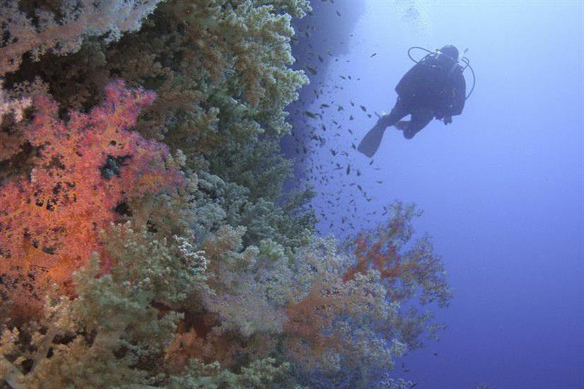Diving at Elphinstone Reef