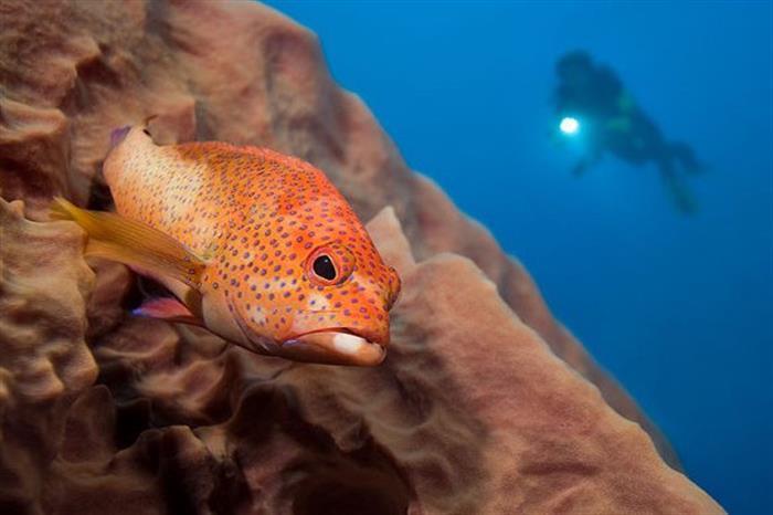 Caribbean marine life Caribbean Explorer II