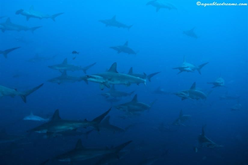 Amazing sights diving onboard Galapagos Sky