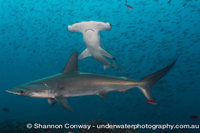 Diverse marine life - Galapagos Sky