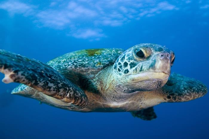 Close Turtle encounter - Galapagos Sky