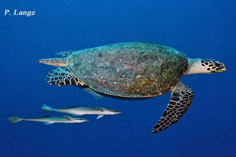 Diverse marine life in Palau - Ocean Hunter 1