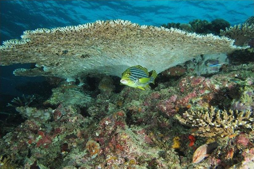 Reef fish in the Maldives - Dream Catcher 2