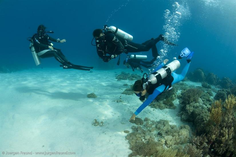 Small group diving with Seven Seas in Raja Ampat