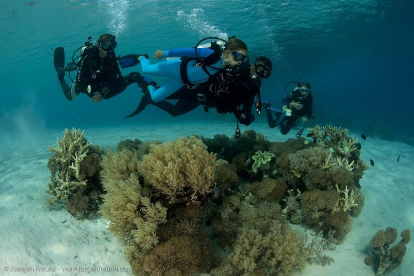 Family diving trips with Seven Seas Indonesia