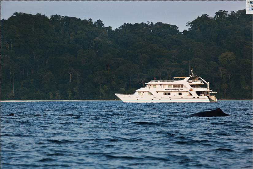 Whale Watching from the Infiniti Liveaboard