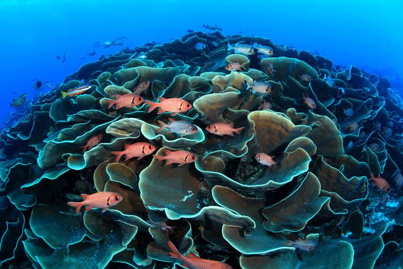Amazing Coral Formations - Palau