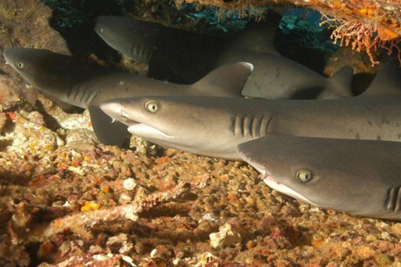 Amazing marine life in Komodo - Moana Liveaboard