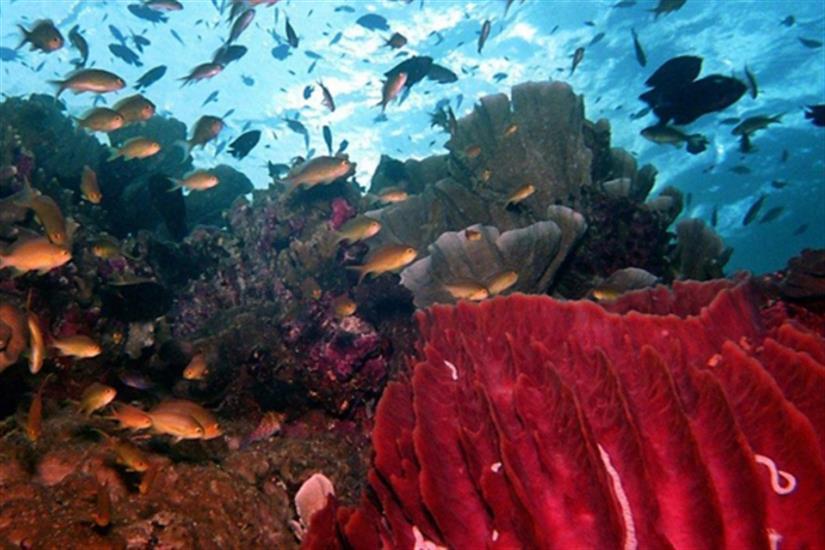 Underwater marine diversity in Komodo - Moana Liveaboard