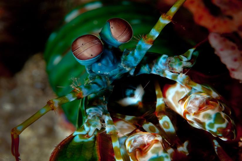Diverse Marine Life with Raja Ampat Aggressor