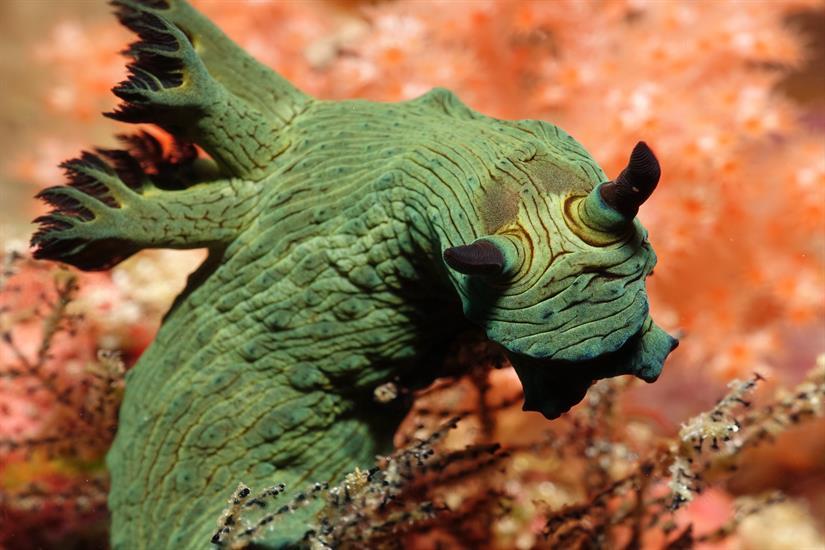 Nudibranch - Scuba Diving Komodo