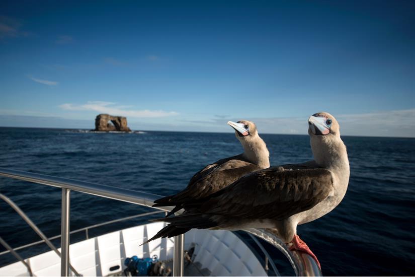 Galapagos Master Dive Liveaboard