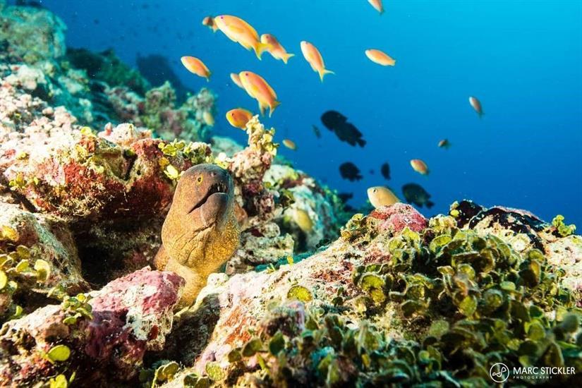 Beautiful Reefs in the Maldives