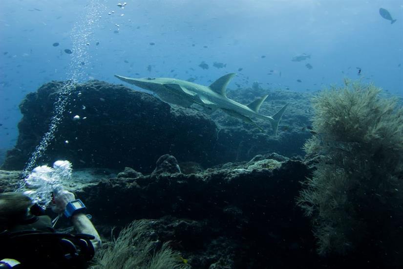 Guitar Shark - Emperor Atoll Liveaboard Maldives