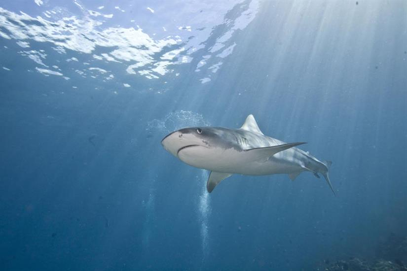 Amazing Cocos Island Diving with Sea Hunter Liveaboard